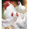 Добавки в корма для с/х животных и птиц,   рыб
